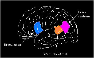 gehirn aus neurowissenschaftlicher sicht